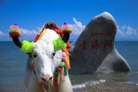 青海湖品质一日游(散客天天发)
