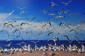 青海湖鸟岛纯玩一日游(散客天天发)