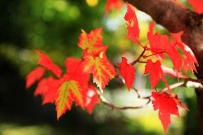 加拿大东海岸深度秋季赏枫十二日之旅